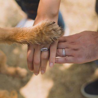 hond op je trouwdag
