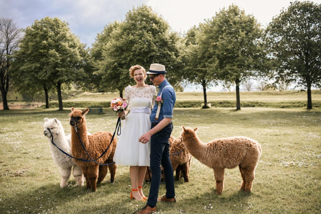 Alpaca bruiloft